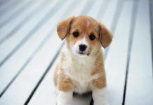 прикольные истории факты о собаках