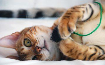 Игрушка для котёнка своими руками