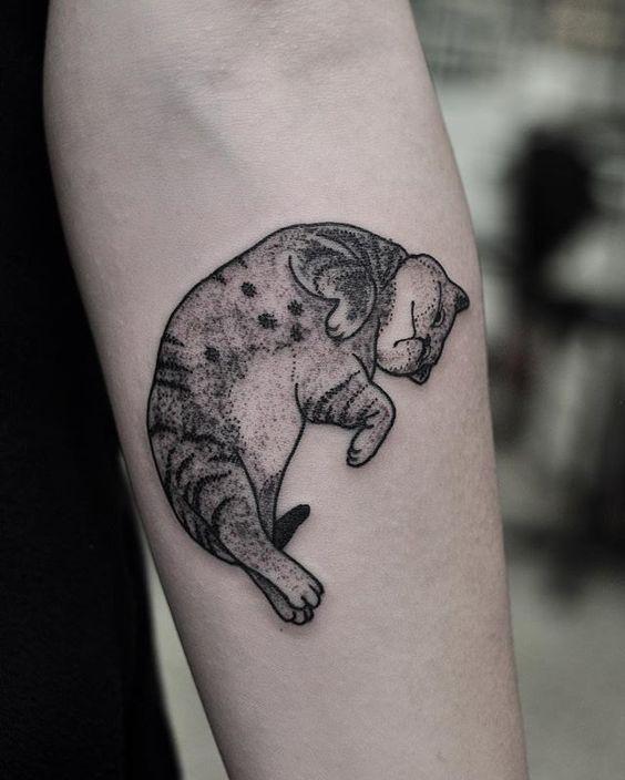 портрет котов фото