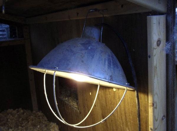 лампы инфракрасного излучения для обогрева птиц