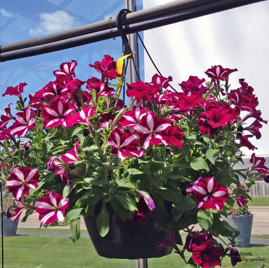 Как вырастить цветы на даче