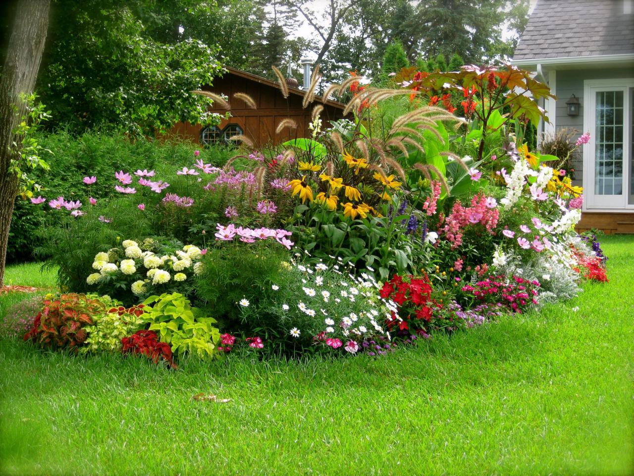 Неприхотливые многолетники цветущие все лето фото с названиями