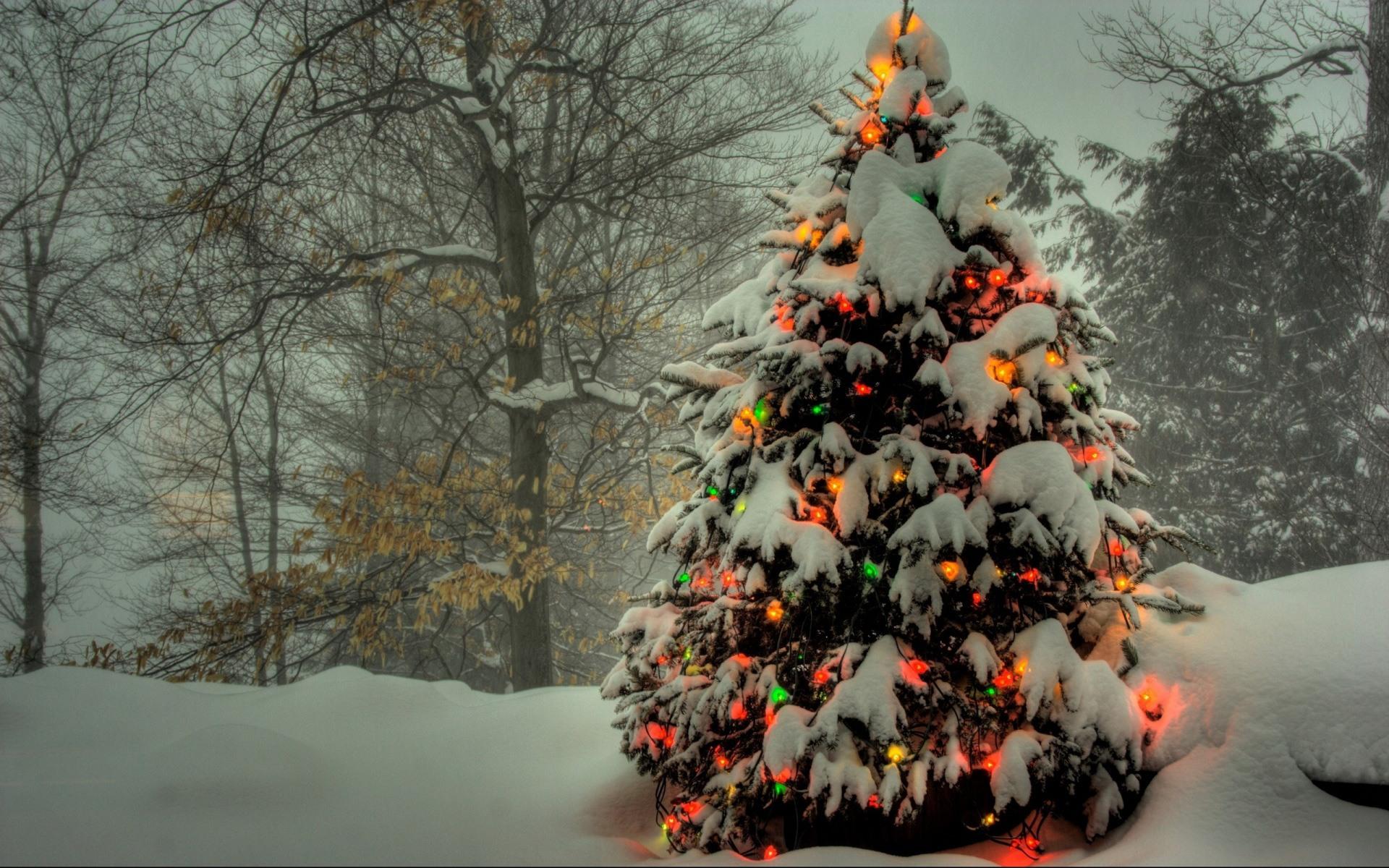 Елка в снегу