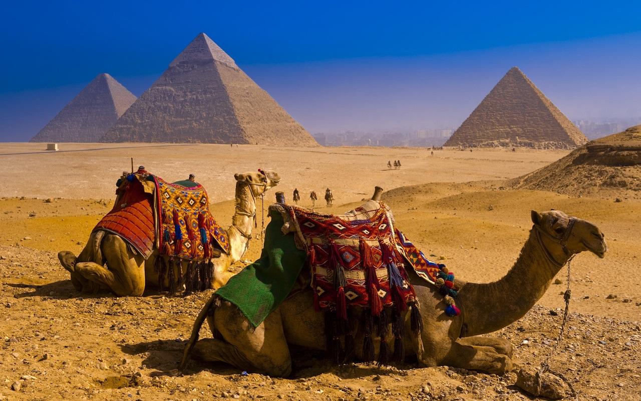 вызревших египет картинки красивые качественные гости должны