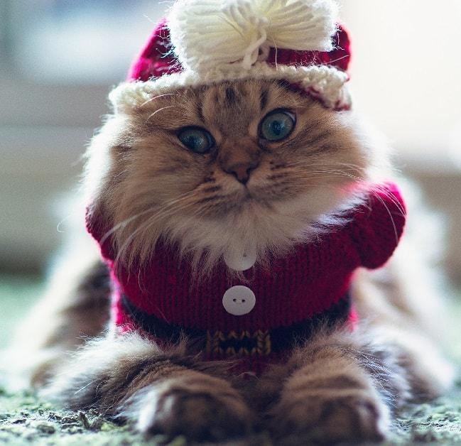 Как сшить для кошки одежду