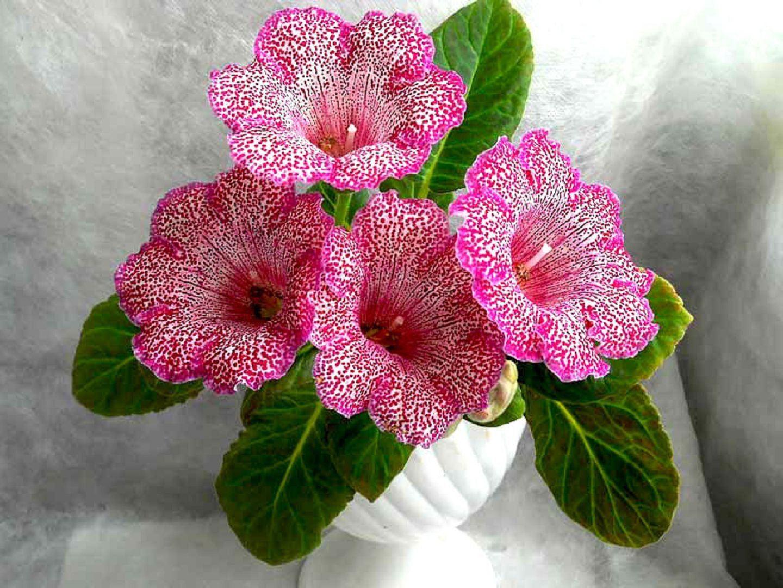 Подкормка в домашних условиях для цветения 882