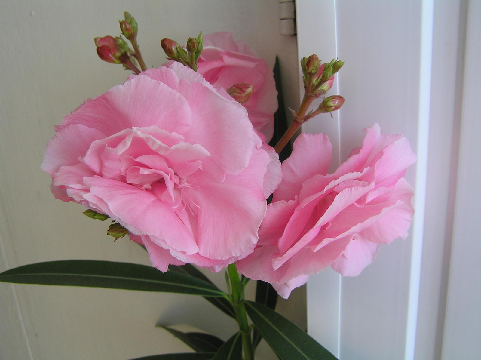 Какие искусственные цветы можно держать дома