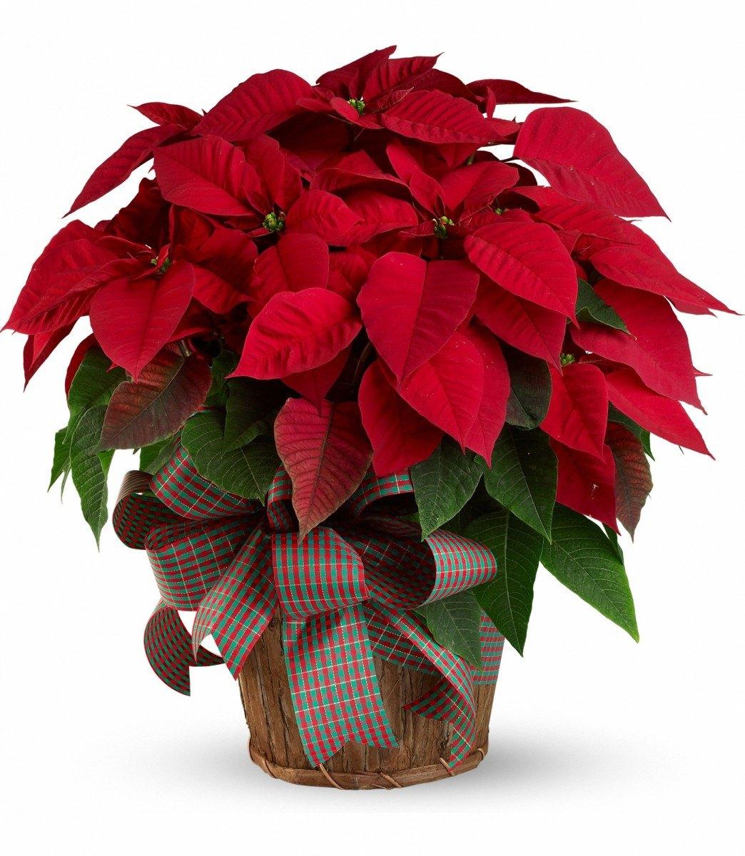 есть как называется вазон с красными листьями фото озером, которое находится