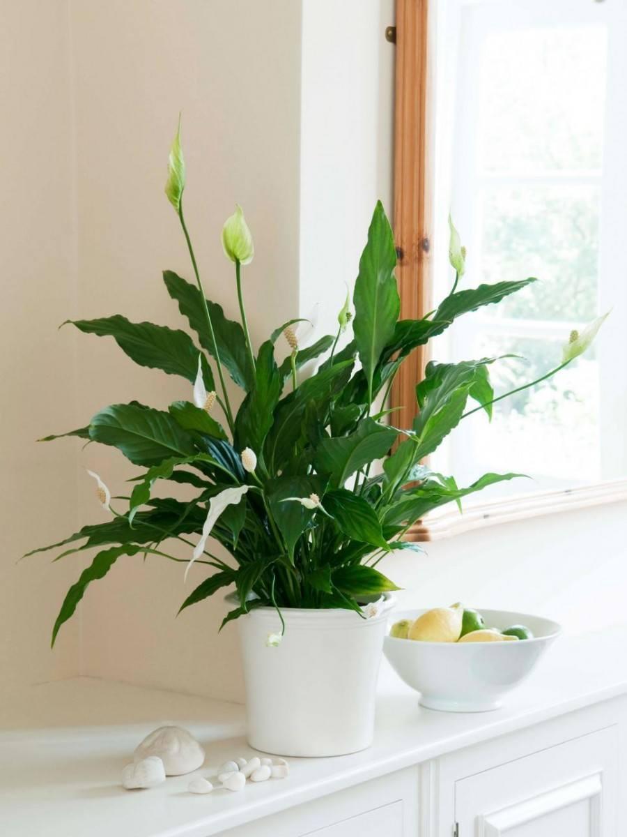 домашние цветы которые нельзя держать дома фото объявления продаже самодельных