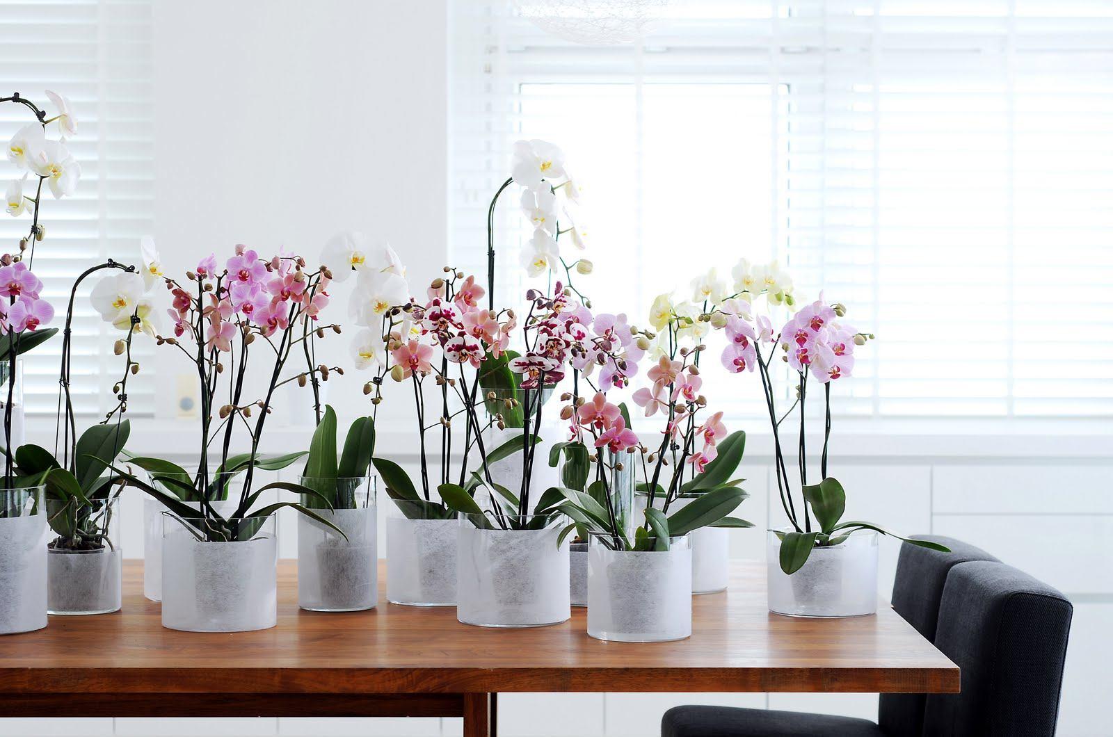 горшки для орхидей какие должны быть фото необходимую папку фото