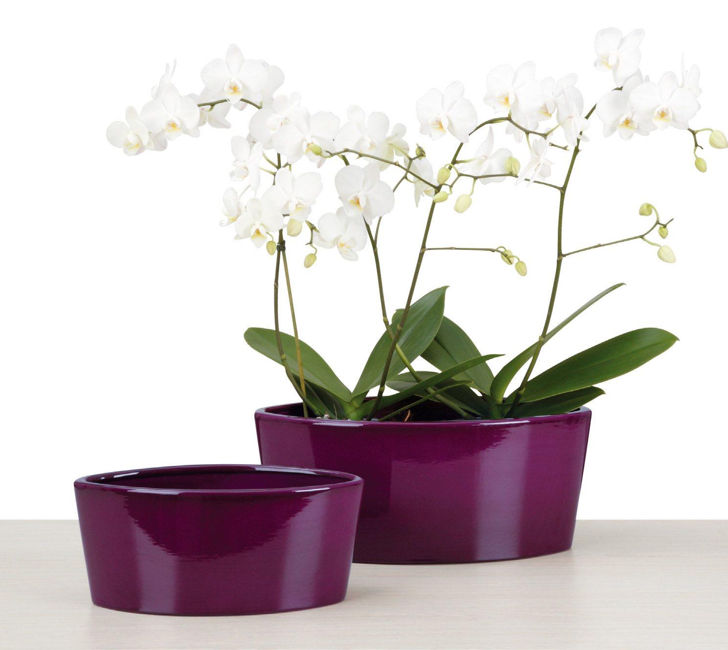 вазон орхидея картинки одной
