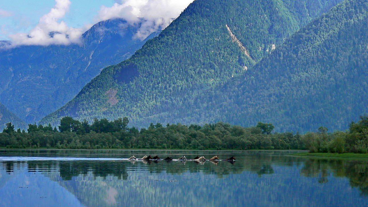 Телецкое озеро фото на рабочий стол