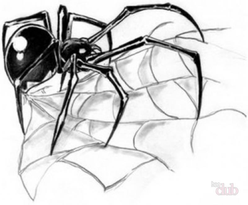 эскиз тату паук с паутиной