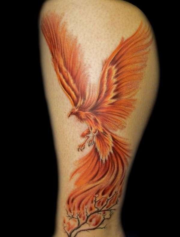 Тату, феникс : фото, эскизы и значение татуировки для мужчин и девушек