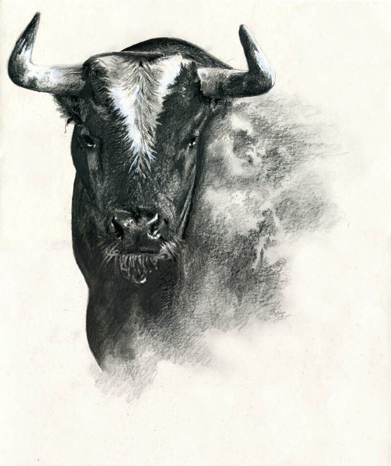Черно белый рисунок быка
