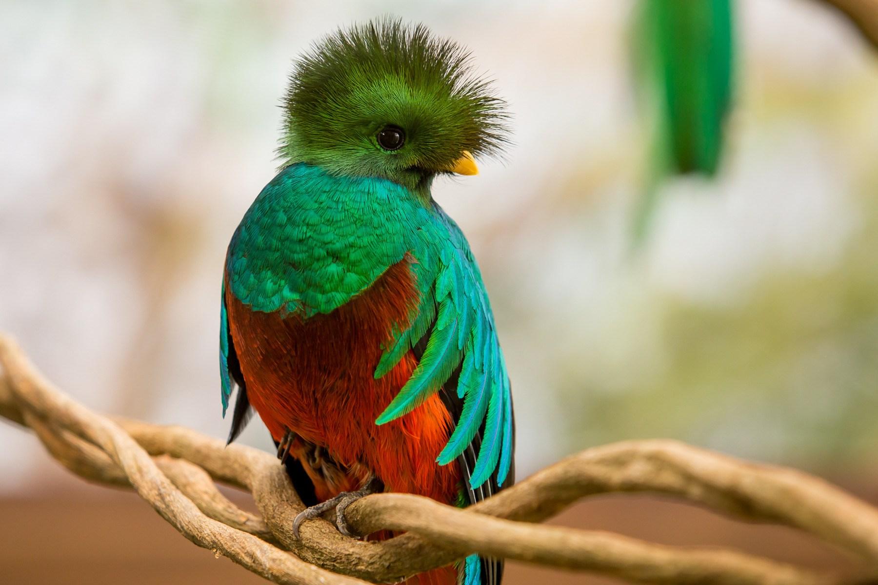 этот праздник необычные птицы мира с описанием с картинками сделана