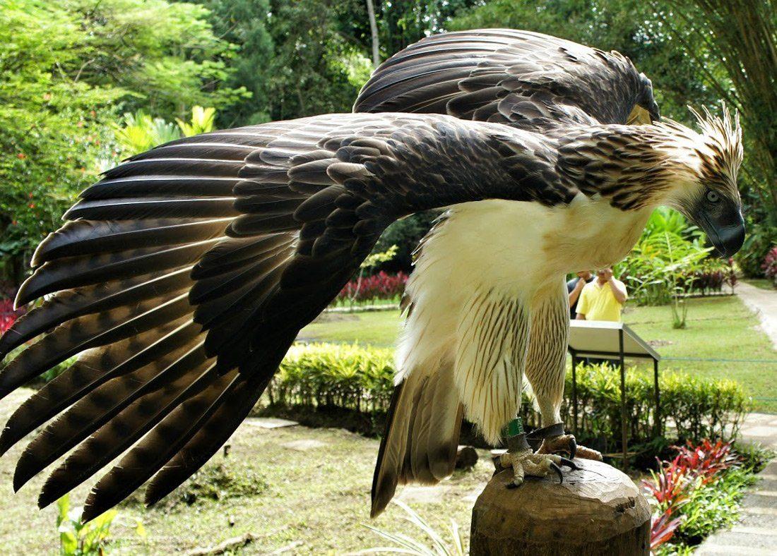 представленные самая большая птица фото сто