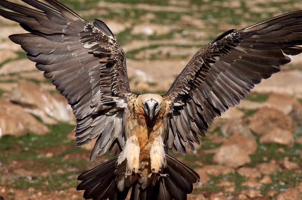 Самые крупные птицы фото