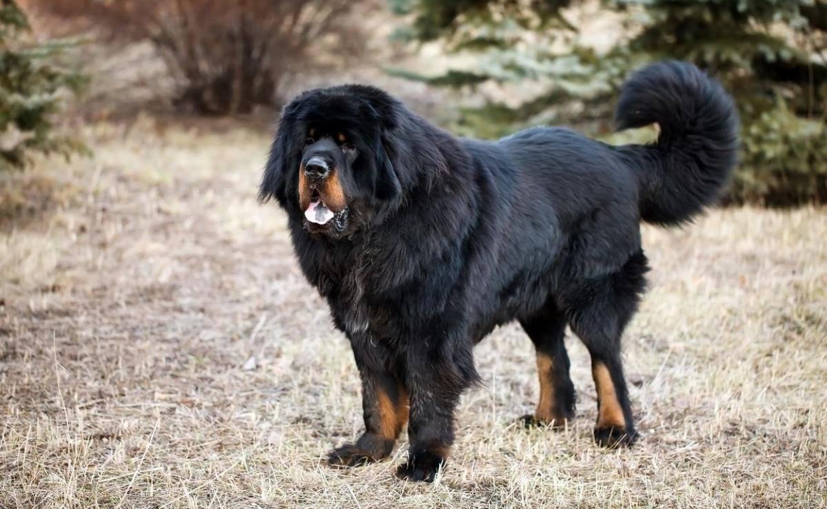 Породы собак крупные с картинками
