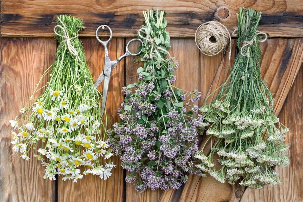 Как быстро и правильно сушить травы? Проверенные способы