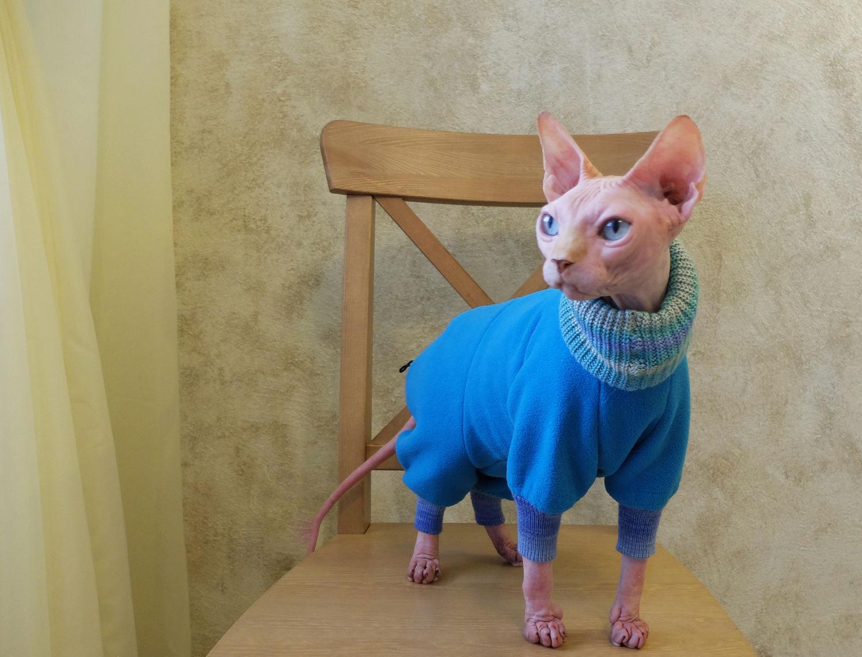 Сшить одежду кошке 23