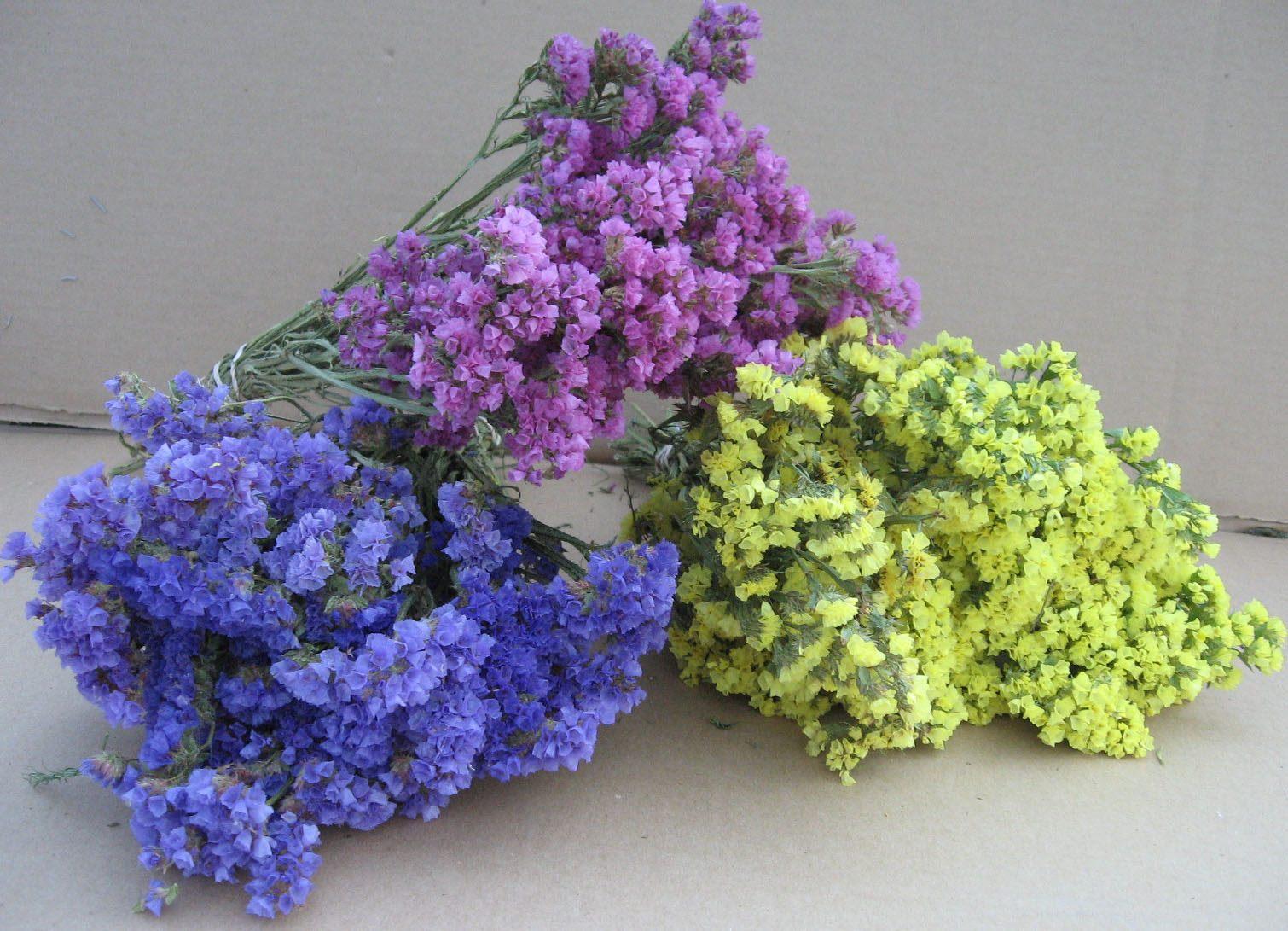 Статица крымская смесь выращивание из семян фото